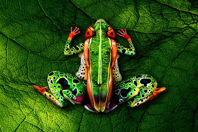 frog-body-painting-optical-illusion-johannes-stotter.jpg